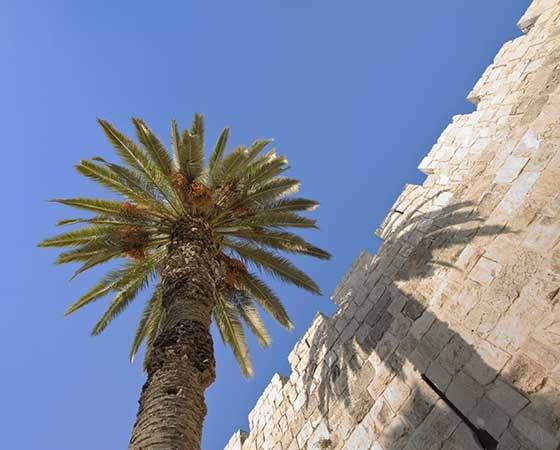 שבועות בקיסר פרמייר ירושלים